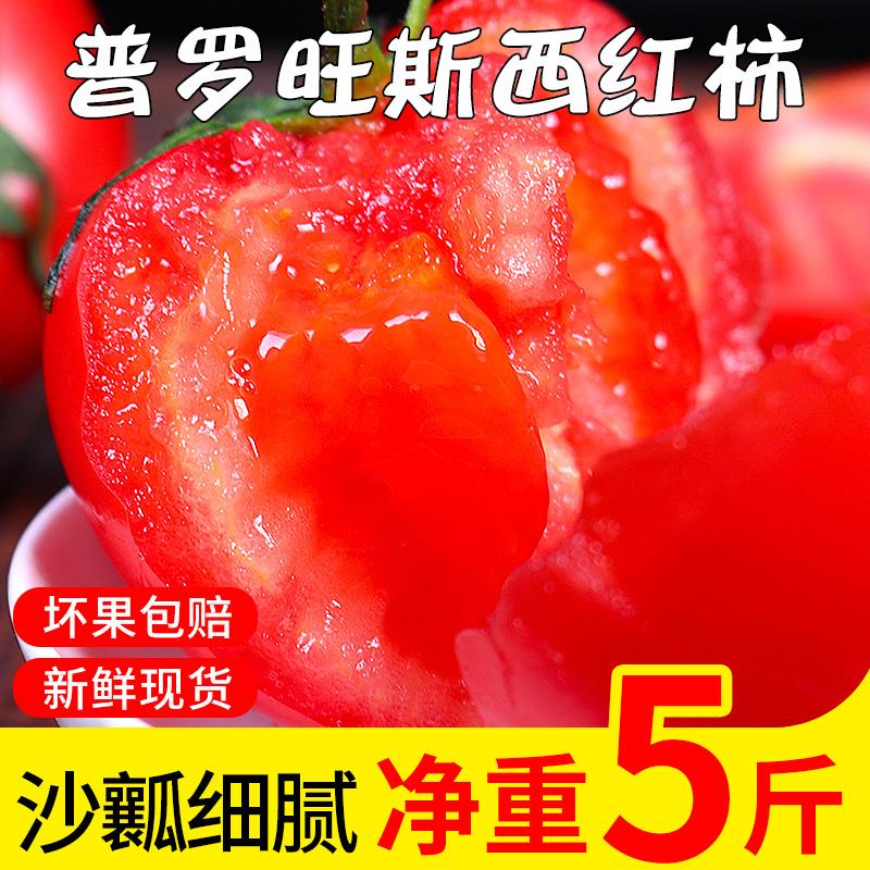 云南露天沙瓤番茄新鲜生吃的蔬菜熟果西红柿净重5斤酸甜多汁口
