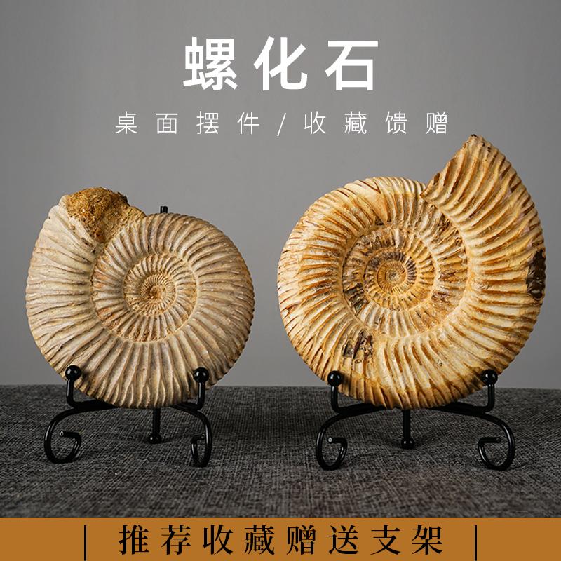 Ископаемые Артикул 624768770952