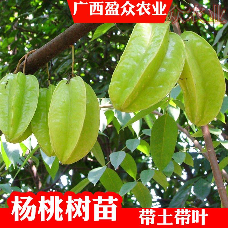 Садовые растения / Деревья / Фруктовые деревья Артикул 612942506473