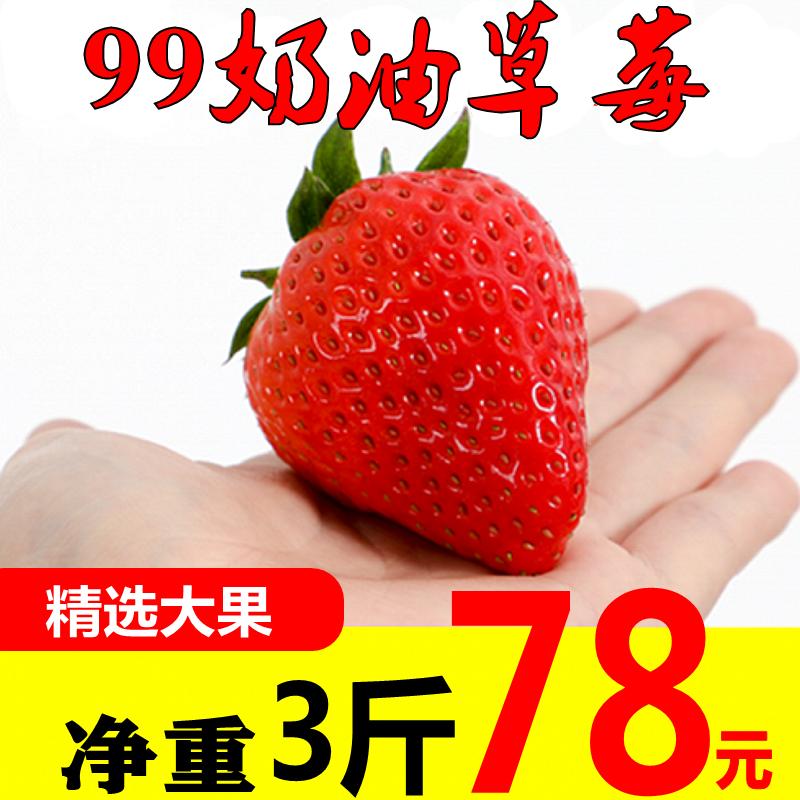 新鲜草莓3斤红颜99奶油章姬草莓水果当季现摘孕妇水果比丹东好吃