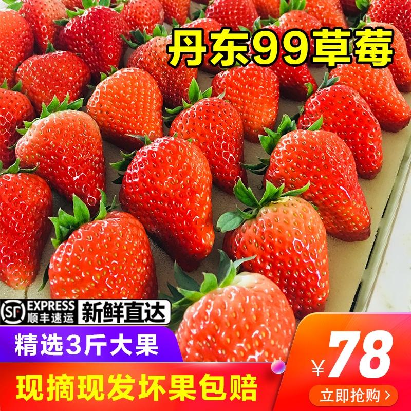 丹东九九草莓牛奶草莓大草莓奶油草莓新鲜草莓水果三斤大果