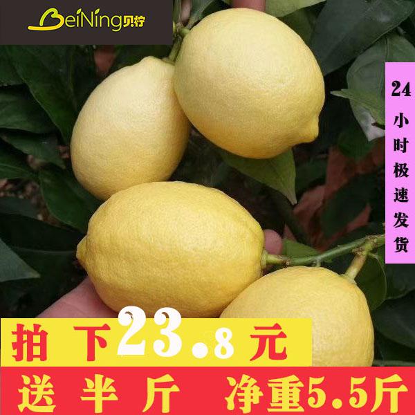 贝柠安岳新鲜皮薄多汁青柠檬黄柠檬