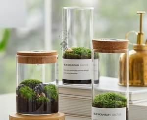 微观苔藓微景观生态瓶diy材料包��跛�草装饰植物小型绿植水族