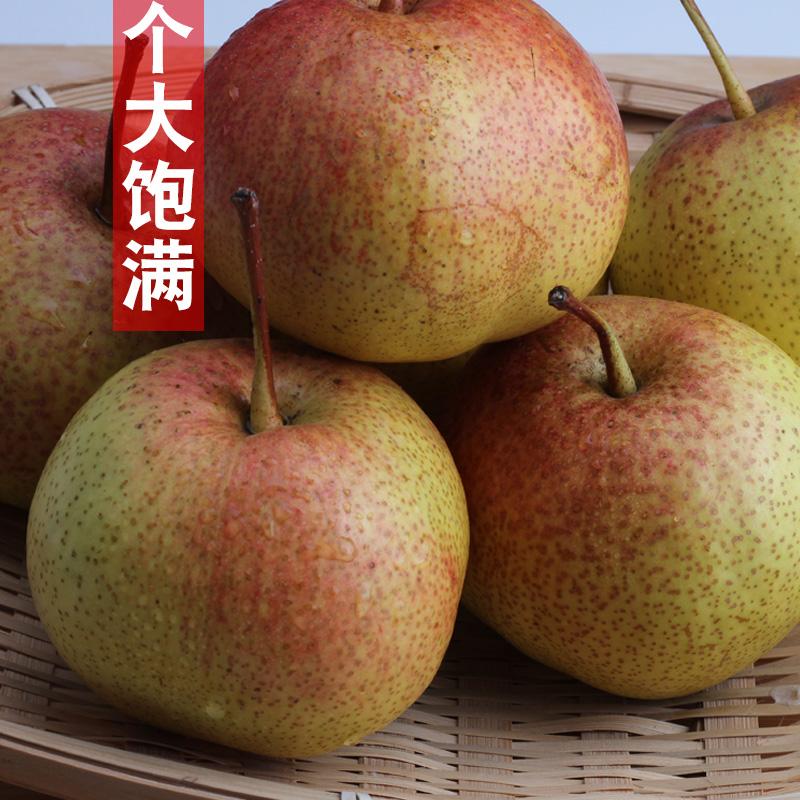 苹果梨正宗霜后5斤包邮新鲜水果东北特产新鲜梨子当季水果10批