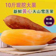 新鲜水果带箱10斤 包邮 云南天山现挖红泥红心香脆清甜雪莲果当季