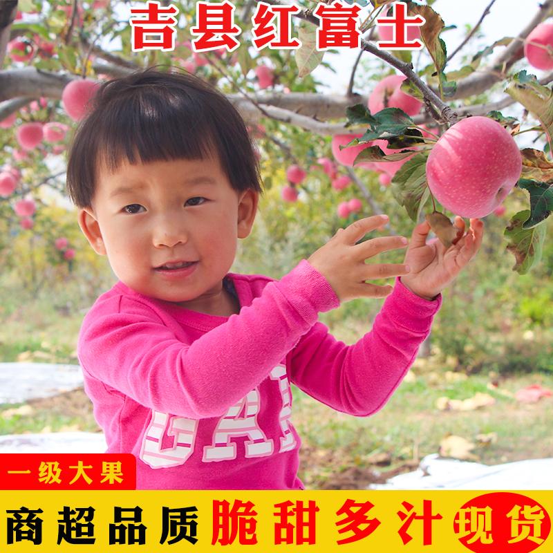 【5斤】红富士苹果脆甜冰糖心