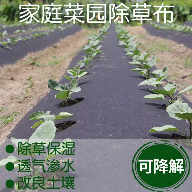 除草种菜保湿菜园防草布楼顶草莓地膜家庭花园神器透气庭院2020