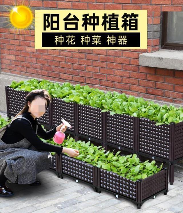 バブルの箱の植木鉢は野菜を植えて巨大なビルの屋上の野菜を植えます。