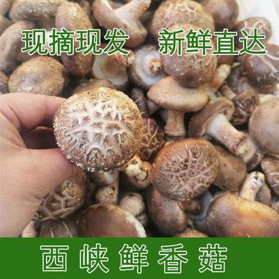 新鲜野生香菇生鲜蔬菜菌蘑小花茹冬菇干草香菇特产脆非干蘑菇