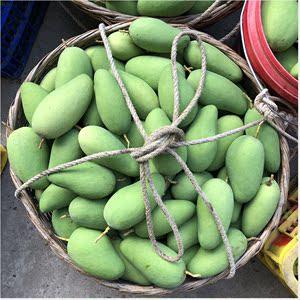 现货新鲜水果生吃芒果酸芒果腌制芒果广西青芒果5斤包邮
