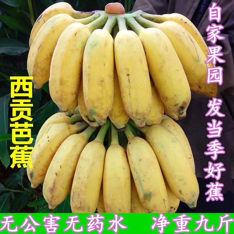 广西粉蕉新鲜香蕉 西贡蕉新鲜水果10斤带箱非芭蕉小米蕉皇帝蕉