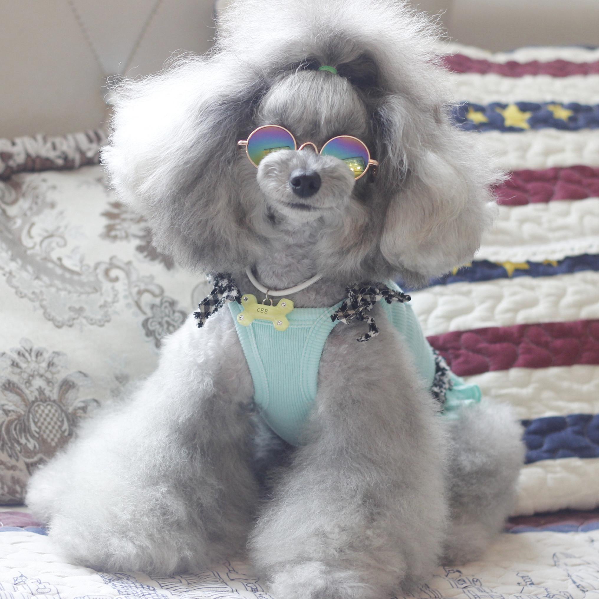 «8 см» яркий домашнее животное очки взрывная волна красивый очки китти очки собака темные очки