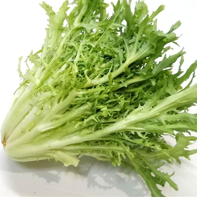 新鲜苦菊生菜苦苣狗芽生菜蔬菜沙拉菜有机苦菊即食沙拉菜500g