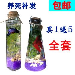 包邮不换水生态鱼瓶水族宠物斗鱼活体DIY办公桌水草微景观玻璃缸