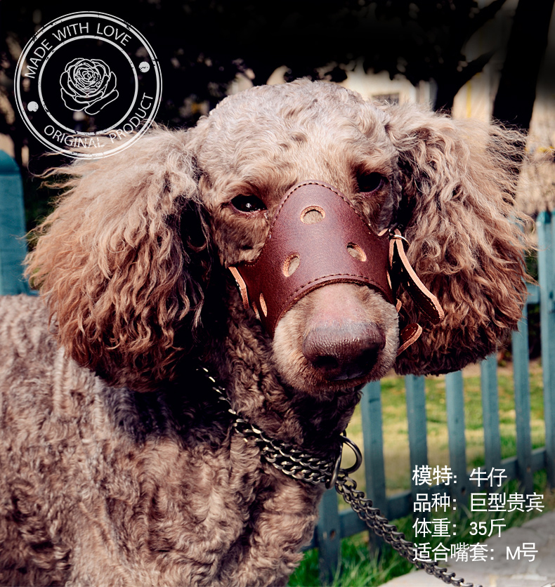 Собака рот крышка домашнее животное собака рот крышка кожа рот крышка собака только лаять устройство золото заусенцы крышка противо укусить противо называемый противо случайный есть крупных собак