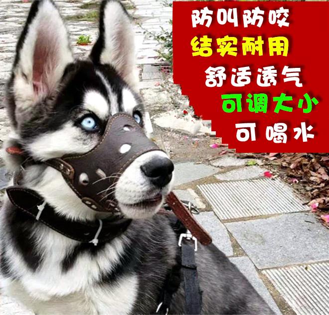 Собака рот против называемый противо укусить небольшой крупных собак только лаять золото волосы собака маски противо случайный есть рот крышка домашнее животное статьи