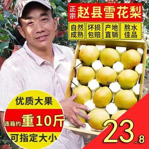 正宗雪梨河北赵县赵州雪花梨整箱10斤新鲜水果梨子包邮熬梨水冰糖