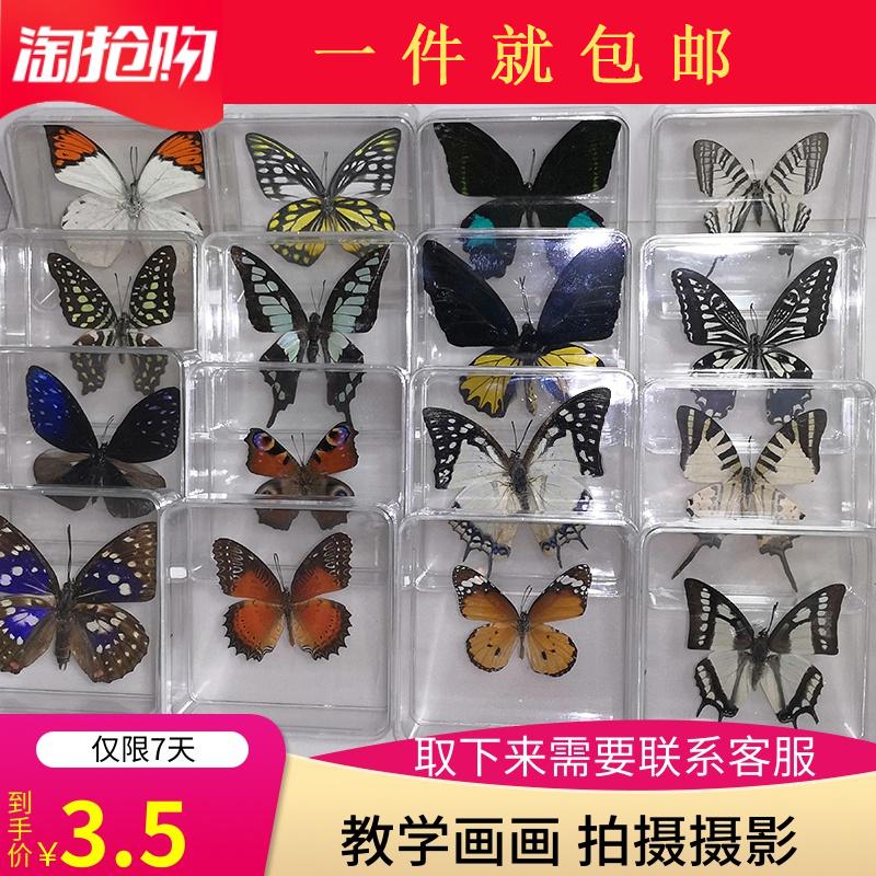 蝴蝶标本真蝴蝶标本昆虫标本蝴蝶拍摄道具DIV学生教学透明盒子装
