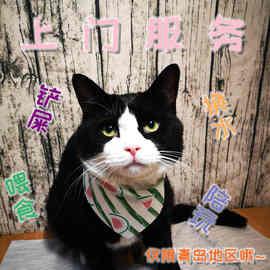 青岛地区专业上门喂猫咪铲屎宠物托管护理服务 代替寄养 仅限青岛图片