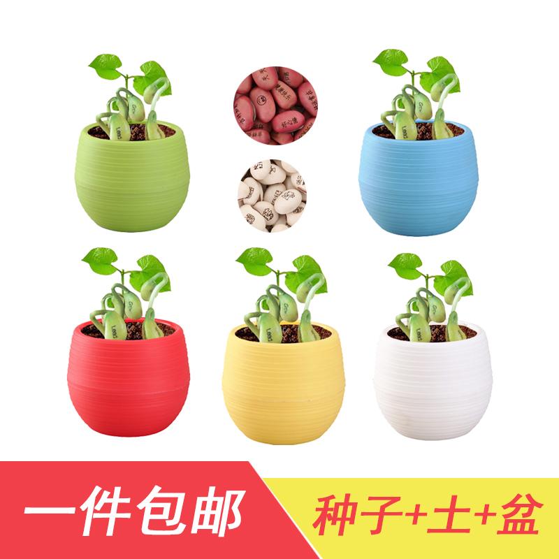 Горшки с растениями Артикул 591069660608