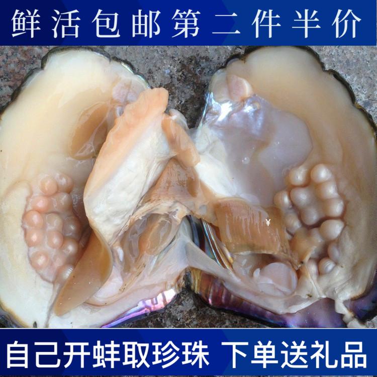 包邮鲜活珍珠母蚌    海螺贝壳海星    DIY手工自己开 可以取珍珠