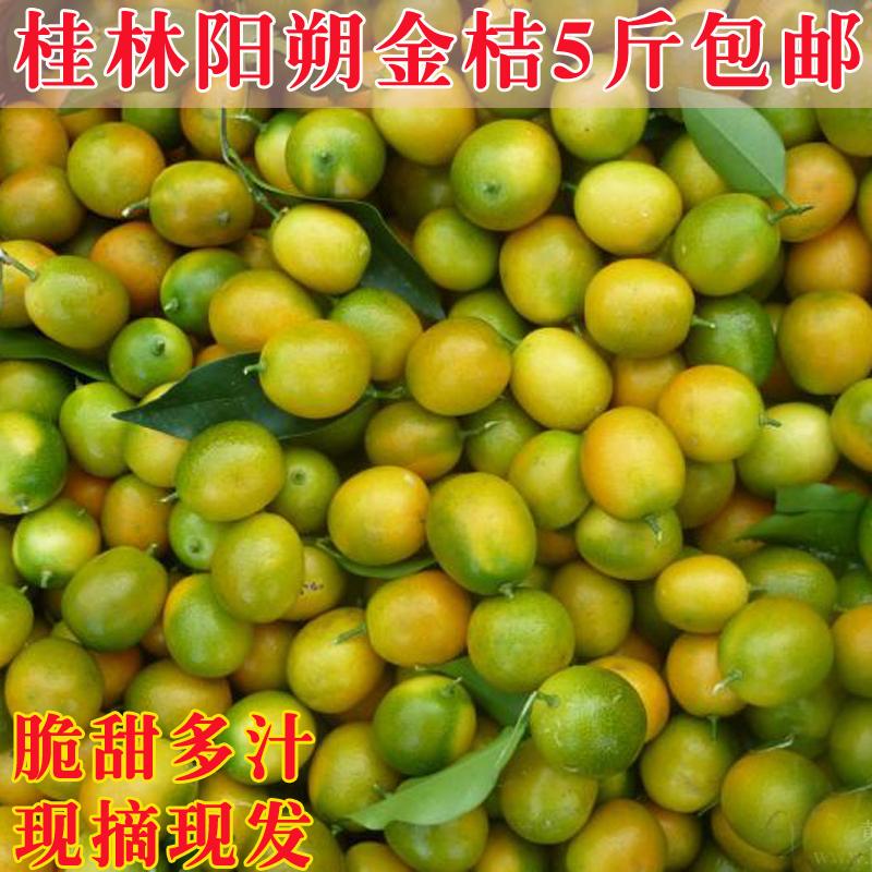 新鲜水果金桔 广西桂林脆皮金桔金橘青桔子非融安年桔金桔5斤包邮