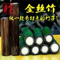 龙雪金丝竹棕竹手把件文玩竹子原材毛料天然实心玉竹新品买一送一