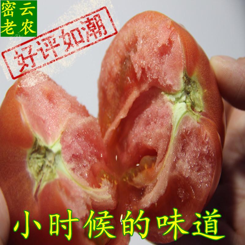 西红柿 密云沙瓤番茄农家新鲜蔬菜自然蜂熟宝宝辅食孕妇水果500克