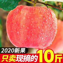 苹果水果冰糖心丑苹果新鲜大个苹果水果一箱新鲜包邮斤整箱10