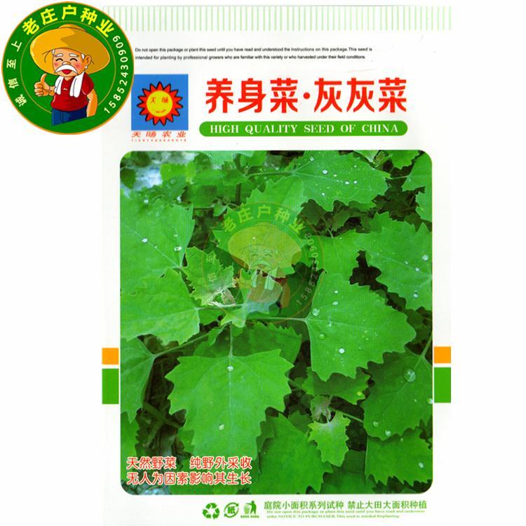 养身菜灰灰菜种子农家菜种子野菜籽阳台庭院盆栽