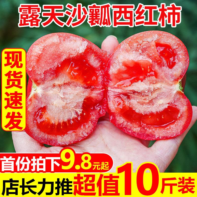 沙瓤番茄西红柿新鲜普罗旺斯10斤自然熟生吃的小番茄蔬菜当季批发
