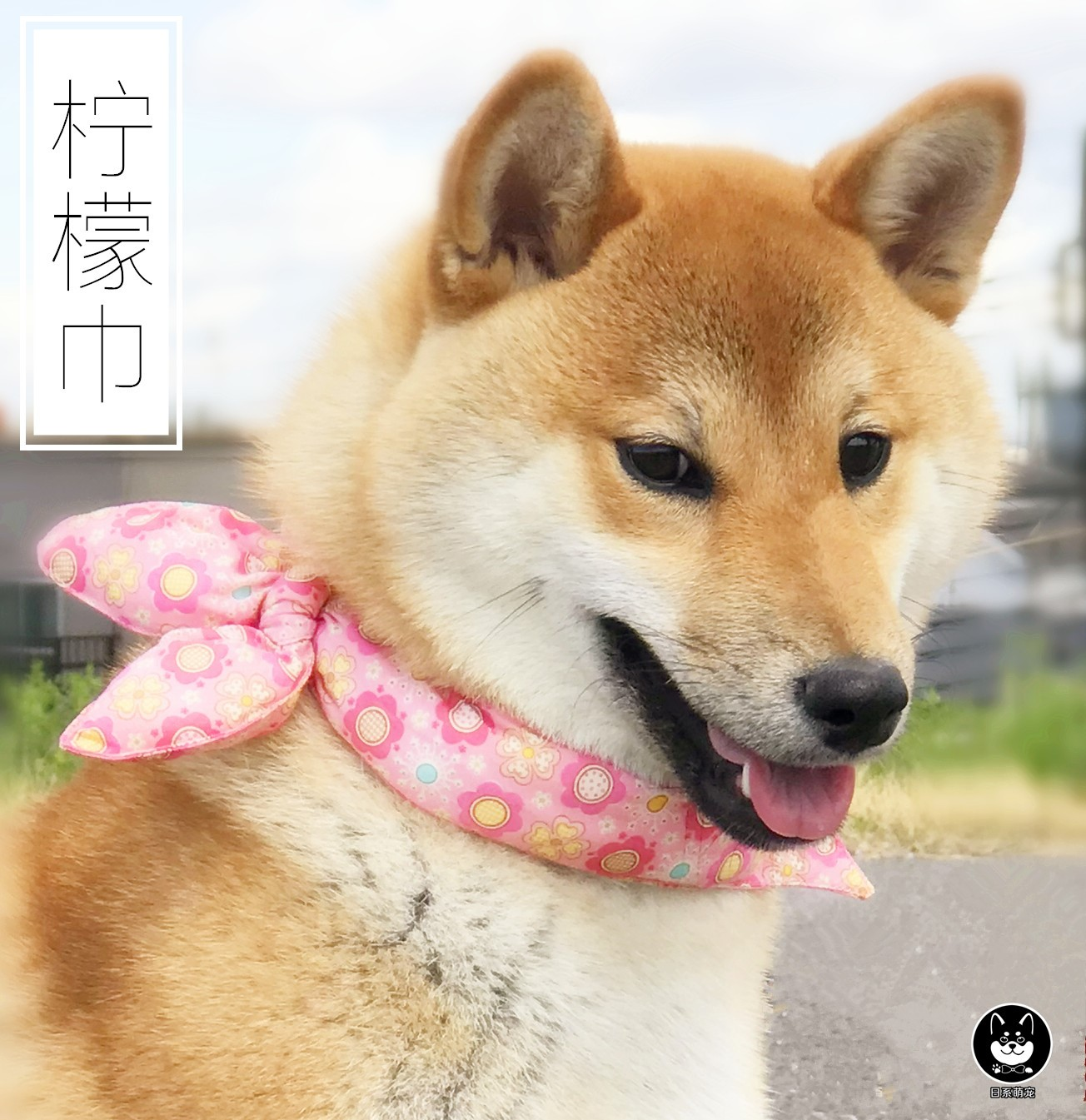 A(定制现货)唐草纹棉围巾柴犬三角巾蝴蝶结宠物猫狗狗配饰 柠檬巾