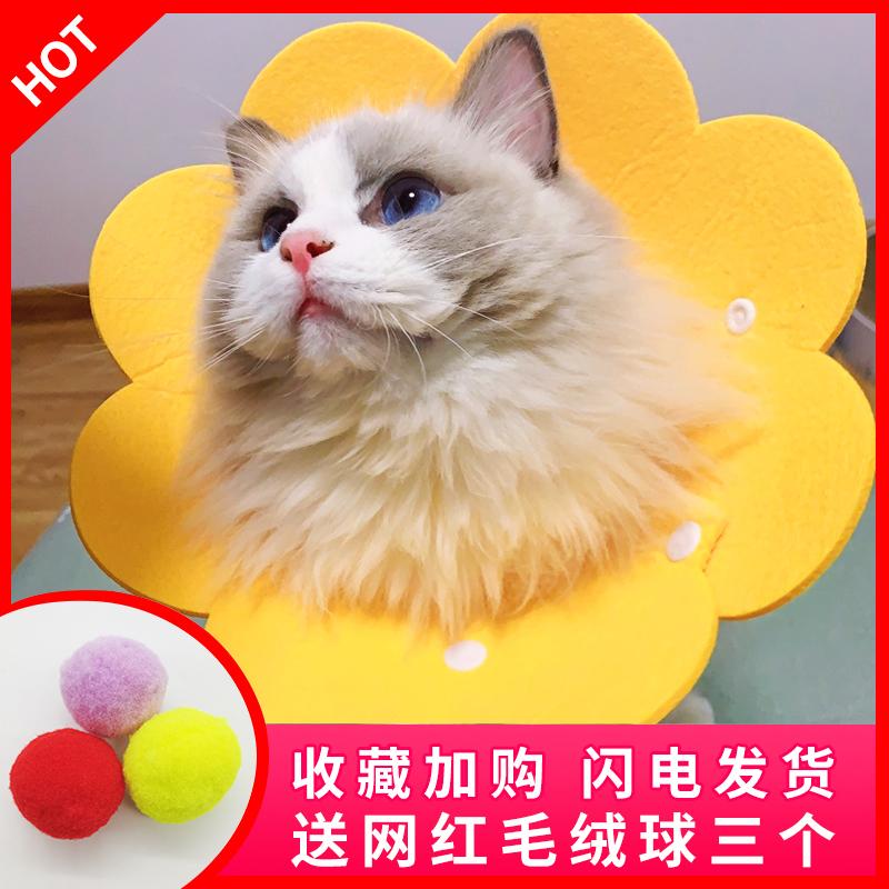 猫咪伊丽莎白太阳花项圈毛毡口水巾头套猫用品脖圈宠物防舔耻辱圈
