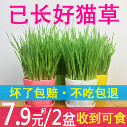 猫草已种好猫薄荷种子种植套装化毛膏水培猫草盆栽猫咪零食果冻片