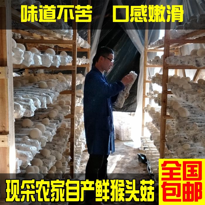 500g猴头菇新鲜包邮养胃特级特产养胃农家自产非东北干货鲜猴头菇