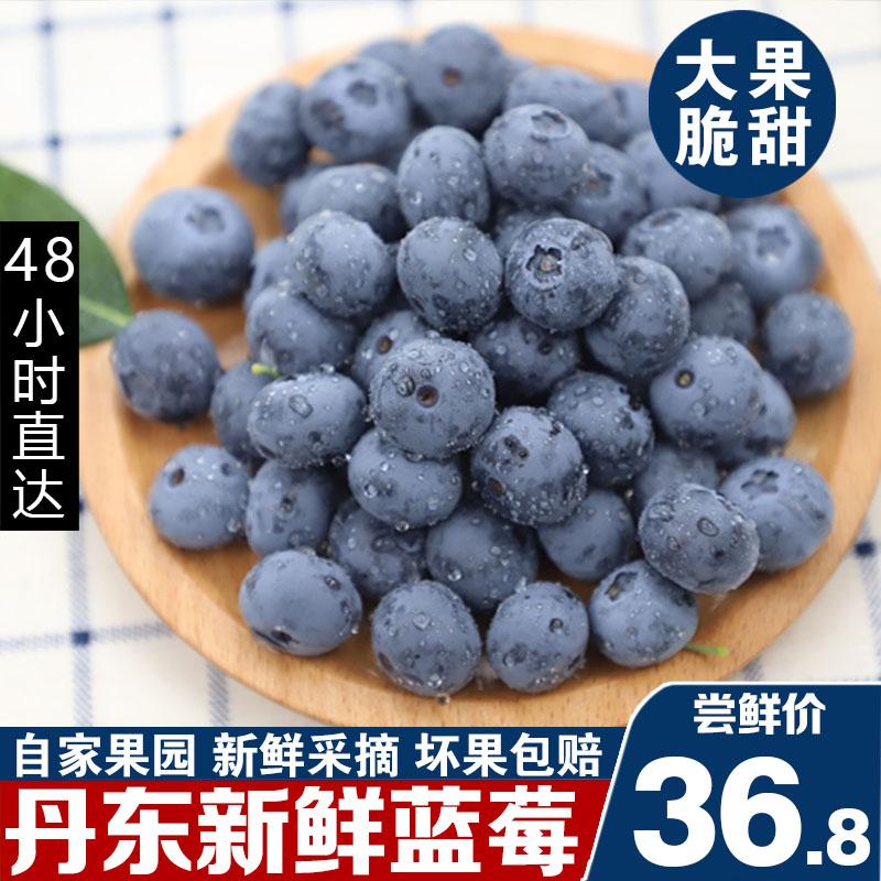 丹东新鲜蓝莓鲜果蓝梅现摘宝宝辅食孕妇新鲜水果非进口500g包邮