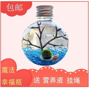 包邮幸福海藻球marimo球藻生态瓶