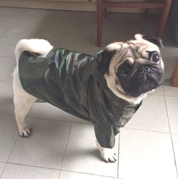 Dog clothes spring and autumn raincoat Teddy dog raincoat golden fur Samo raincoat pet clothes bage bullfighting dog clothes