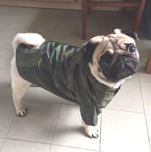 狗衣服春秋雨衣 泰迪狗雨衣金毛萨摩雨衣宠物衣服 八哥斗牛狗衣服
