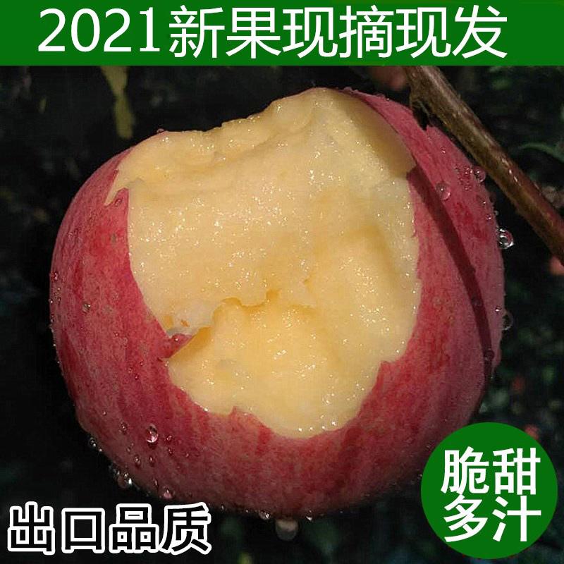 2020 Qingyang, Gansu Red Fuji pregnant women eat fresh apples, fresh fruits, fresh rock candy heart 10 jin