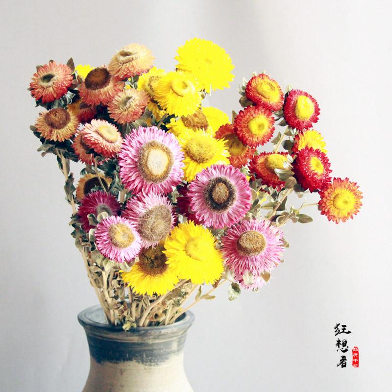 狂想者【雏菊大束30朵】自然干花真花手工绿叶麦秆菊插花家居装饰