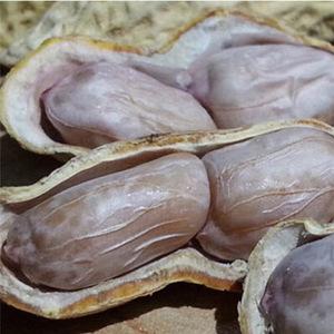 20年新散福建龙岩天然水煮白晒花生盐咸干五蒜香咸酥湿烤花生特产