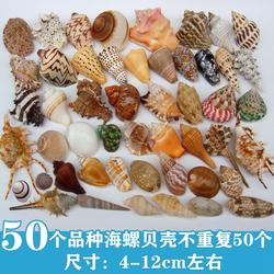 天然海螺贝壳海星鱼缸水族箱造景装饰寄居蟹换壳工艺品收藏小礼物