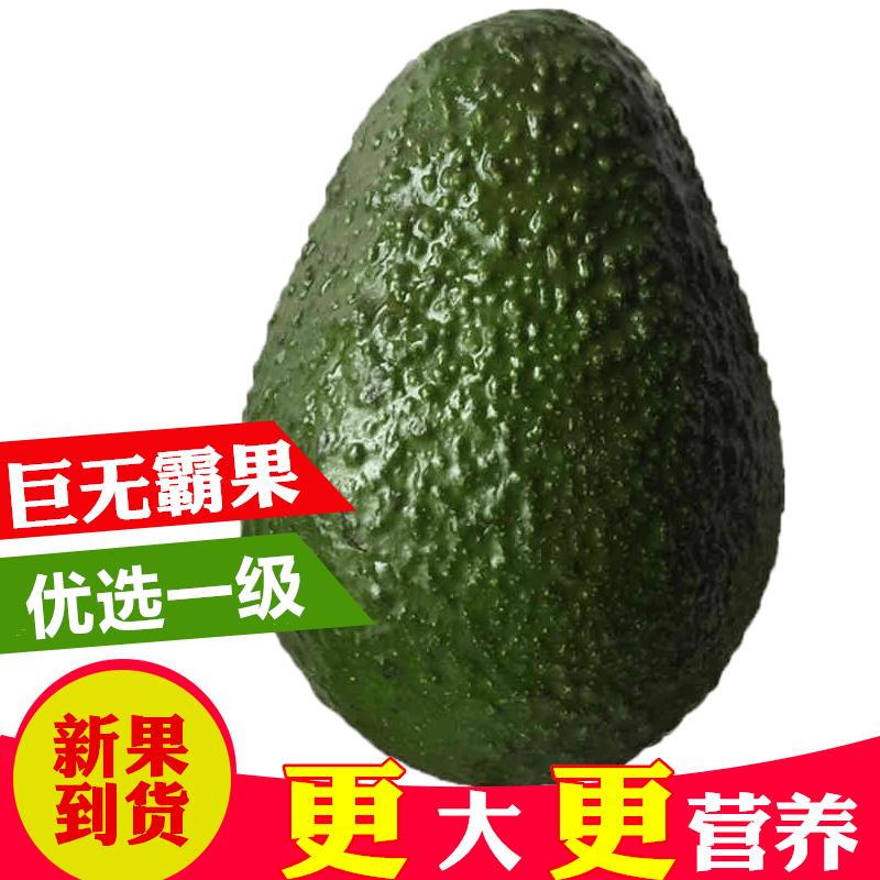 【新果现货】进口巨无霸牛油果 5个装鳄梨 辅食进口水果