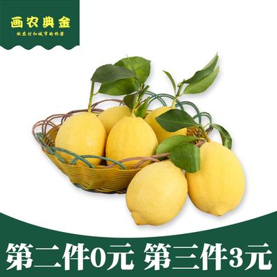 【7个柠檬】潼南新鲜现摘黄柠檬水果 农家安岳尤力克一级90-110g