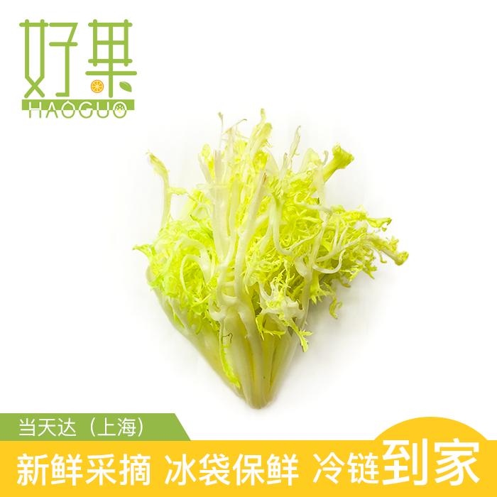 新鲜 黄苦苣100g  沙拉蔬菜 同城配送【江浙沪皖任意5件包邮】