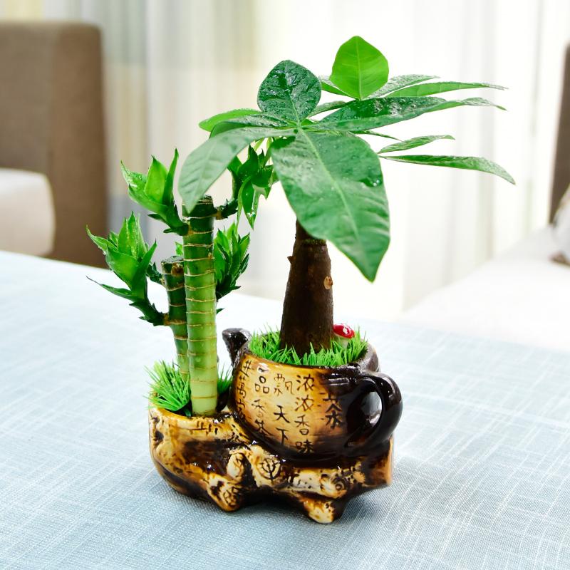 发财树富贵竹袖珍椰子绿植盆栽办公桌室内吸甲醛绿色盆景观叶植物