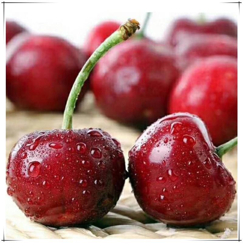 Fresh fruit produced by Dalian open-air truck Lizi cherry for pregnant women