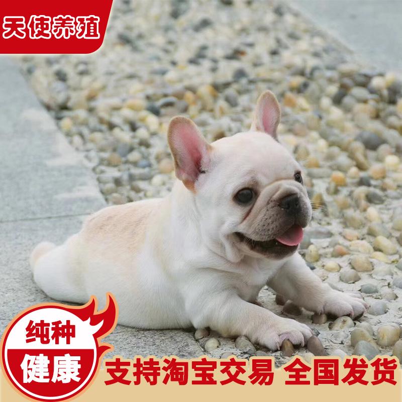 法国斗牛犬幼犬活体纯种蓝牛虎斑法牛奶油奶白宠物小狗狗犬舍法斗