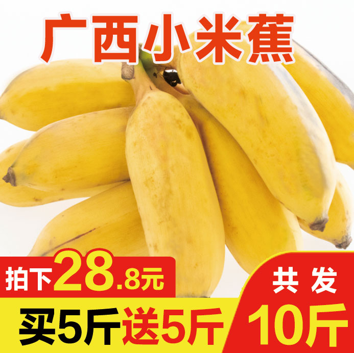 广西小米蕉水果新鲜banana带箱10斤小香蕉批发包邮不是芭蕉皇帝蕉